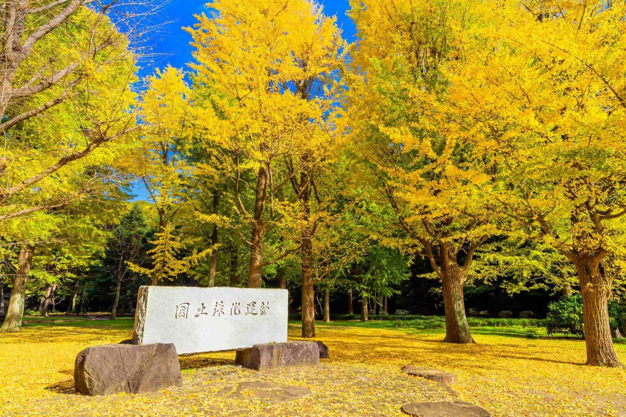 代々木 公園