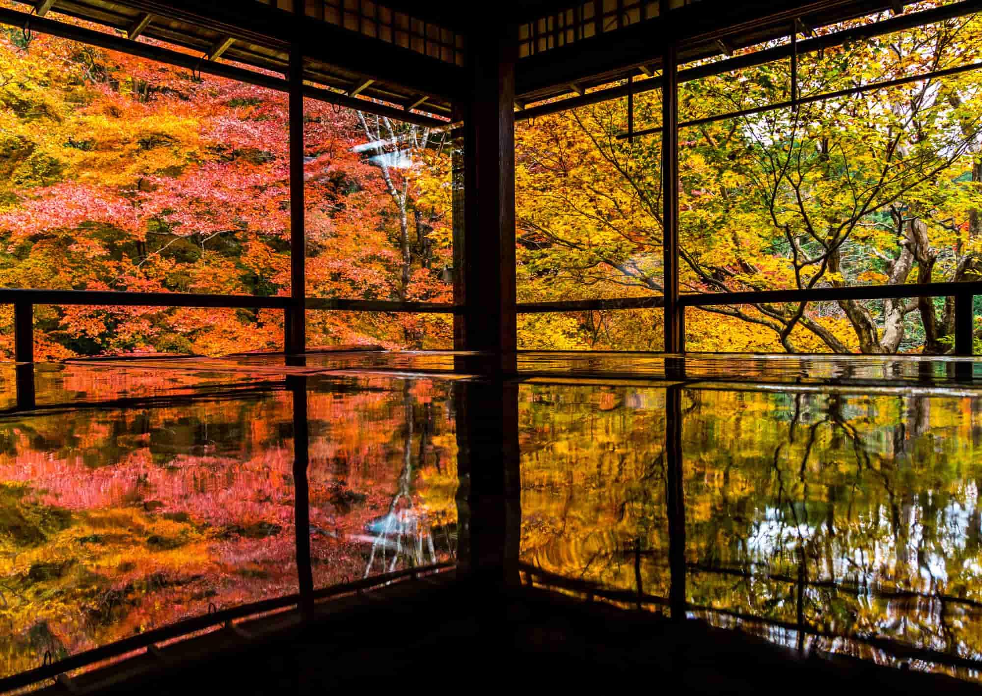 机に反射する瑠璃光院の紅葉