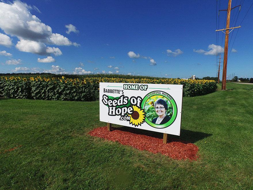 妻のために、約50万坪の「ひまわり畑」をオープン!