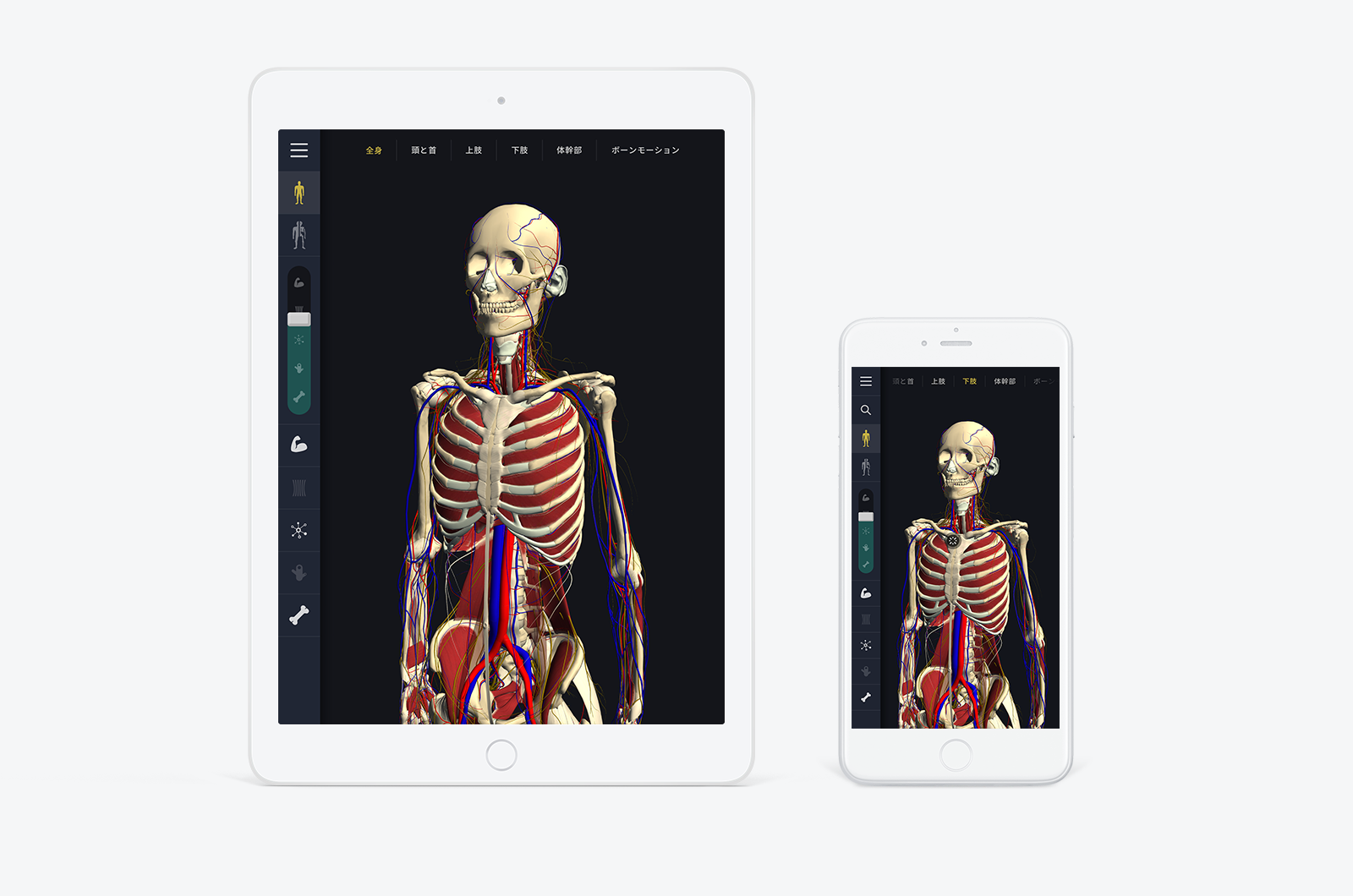 teamLabBody -3D Motion Human Anatomy-