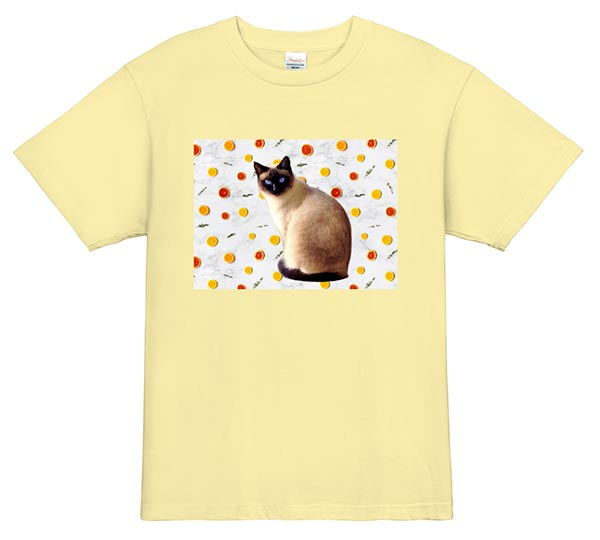 猫の写真をデザイン 背景変更