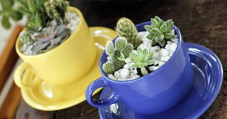 植物との相性抜群のマグカップ