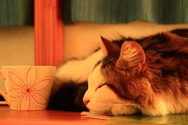 マグカップを猫のデザインにする方法と理想どおりに仕上げるコツ