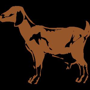 動物・生き物ST-2854