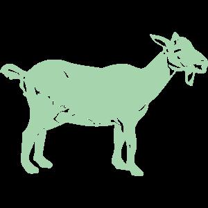 動物・生き物ST-2897