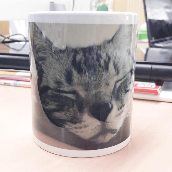 毎日の普段使いにと飼い猫の写真でオリジナルマグカップを作ってみました。