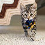 愛猫家の方必見!かわいい猫ちゃんのために出来る手作りアイディアのサムネイル画像