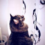 猫がカーテンを登るのをやめさせたい!困った行動の原因と対策のサムネイル画像