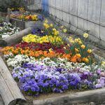 【ガーデニング】春夏秋冬、花が絶えない花壇のレイアウト方法のサムネイル画像