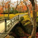 自然に思いきり癒されに行こう。今度の休みは箱根ドライブで決まり!のサムネイル画像