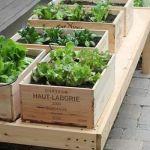 冬もベランダで家庭菜園☆プランターで冬の野菜を育てよう!のサムネイル画像