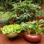 野菜を家で作ってみたい!初心者でも安心、プランター野菜の基本のサムネイル画像