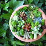 小さな癒し♡多肉植物を寄せ植えしてかわいいインテリア作りのサムネイル画像