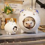 かわいすぎる♡ハリネズミ飼育の注意点を理解して大切に育てようのサムネイル画像