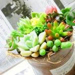 ぷにぷにカワイイ多肉植物♡いっぱい集めておしゃれに寄せ植えしようのサムネイル画像