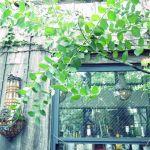 【都内】極上のリラックス空間は都会にも。緑いっぱいの癒しカフェ5選のサムネイル画像