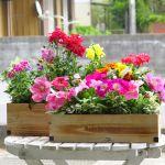 初心者でも手軽に楽しめる!プランターを使ったお花の育て方のサムネイル画像