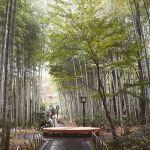 """伊豆の日帰りデートは修善寺で決まり。""""粋な""""大人デートを実現♡のサムネイル画像"""