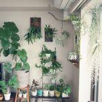 おしゃれなお部屋のインテリアにぴったりな観葉植物の種類とはのサムネイル画像