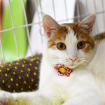 猫好き必見!新スタイルの猫カフェ《ネコリパ》で楽しく猫を幸せに♡のサムネイル画像