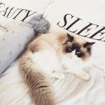猫好き共感!猫好きライターが選ぶ《猫のかわいいところ♡》5選のサムネイル画像