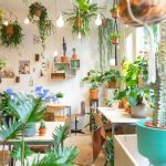 大人気!ぱっと華やぐ《観葉植物》をプラスして素敵な部屋づくりを♡のサムネイル画像