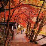 紅葉シーズンに♡魅力たっぷり愛知県【香嵐渓】に出かけよう!のサムネイル画像
