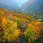 お疲れ気味のあなたへ。【飛騨高山】へ癒しの旅行に出かけよう♡のサムネイル画像