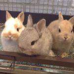 動物好き必見♡都内で可愛い【動物に会えるお店】をご紹介!のサムネイル画像