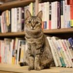 猫好きしか見ないで♡【Cat's Meow Books】の魅力!のサムネイル画像