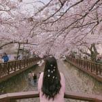 私の髪は春の香り♡All¥3000以下 【桜の香りシャンプー】5選のサムネイル画像