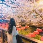3月限定!表参道の《サクラチルバー》で桜に埋もれる計画♡のサムネイル画像