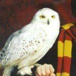 ハリーポッターといつも一緒!ふくろうのヘドウィグ知っていますか?のサムネイル画像