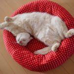 【猫も暖かいお布団が好き!】猫が喜ぶ「猫用ベッド」をご紹介!のサムネイル画像