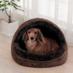 大切なペットに最適なベッド選びを。犬猫の特性に合わせたベッドとはのサムネイル画像