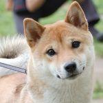 知ってた?!犬に関する世界なんでもランキング【画像あり】のサムネイル画像