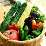 みんなが大好きな「野菜」の大人気レシピについてご紹介します!のサムネイル画像
