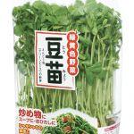 【豆苗って何!?】こんな美味しい豆苗を食べないなんてレシピ!のサムネイル画像