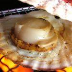 大きなホタテ丸ごといただく醍醐味もよし、レシピを用いて料理も良いのサムネイル画像
