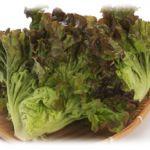 サニーレタス!美味しいサニーレタスのレシピをご紹介いたします!のサムネイル画像