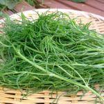 """美肌効果&むくみ対策!栄養豊富な""""陸の海藻「おかひじき」""""レシピのサムネイル画像"""