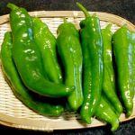 【京野菜★万願寺とうがらし】大人味の簡単で絶品なおつまみレシピのサムネイル画像