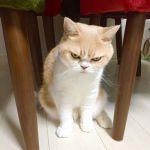 「小雪」!?女優の!?いえいえ猫です。~猫の小雪についてのまとめ~のサムネイル画像