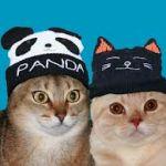 毛糸の帽子の時期がきた!!防寒対策にもなるおしゃれな帽子を探せ!のサムネイル画像