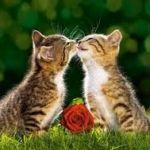 【猫好き必見!】絶対欲しくなる♪とっても可愛いねこの雑貨のサムネイル画像