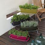 初心者でもできる家庭菜園でハーブを育てるやり方を紹介します!のサムネイル画像