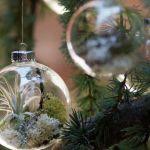 大人気!不思議な植物エアープランツのおしゃれな飾り方まとめのサムネイル画像