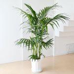 初心者でも枯れにくく育てやすい!初心者向け観葉植物【8選】のサムネイル画像