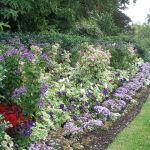 【画像】イギリスのガーデニングはどんなもの?お庭造りの参考に!のサムネイル画像