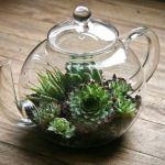 【可愛い!】多肉植物を使って、テラリウムを作ろう!【カンタン】のサムネイル画像